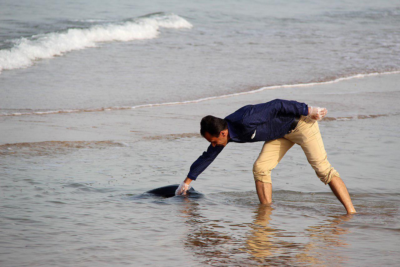 پاکسازی دریا از زباله در پارس شمالی 3